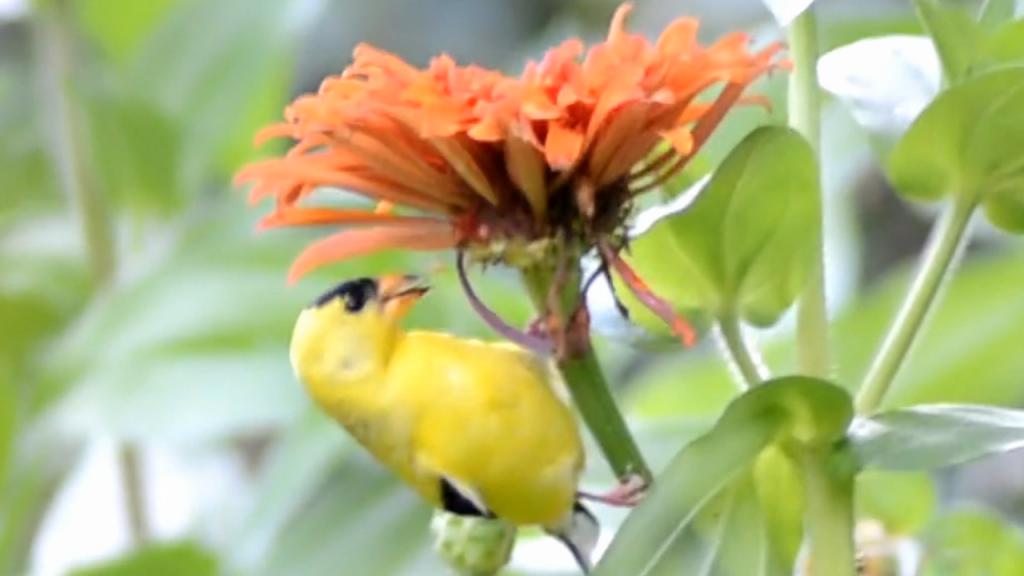 Bird Foraging & Eating