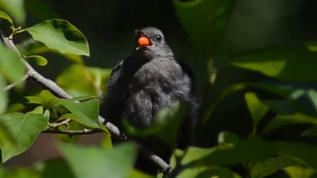Bird Regurgitation