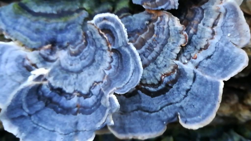 Plant & Fungus
